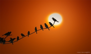 sunrise_birds_by_regayip-d5ubgut