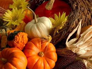 punpkin Harvest